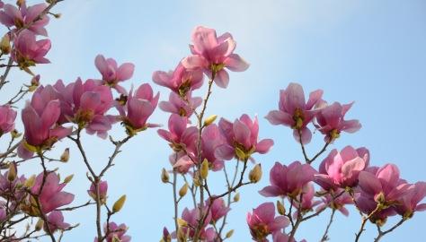 Spring 2013_DSC_3393a